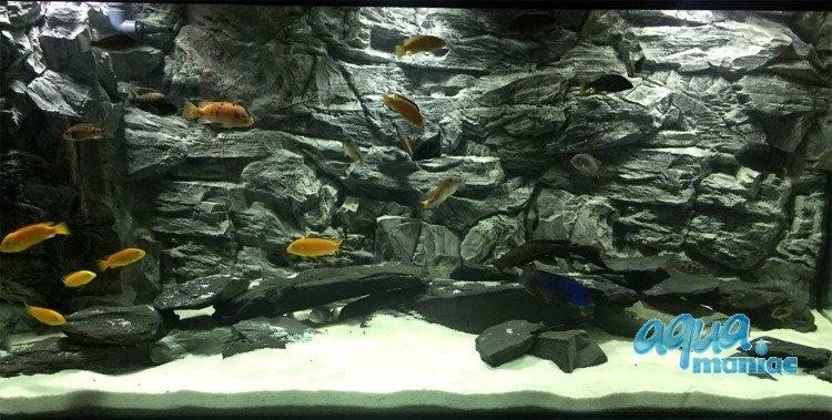 aquarium background for juwel aquarium 3d rock background. Black Bedroom Furniture Sets. Home Design Ideas