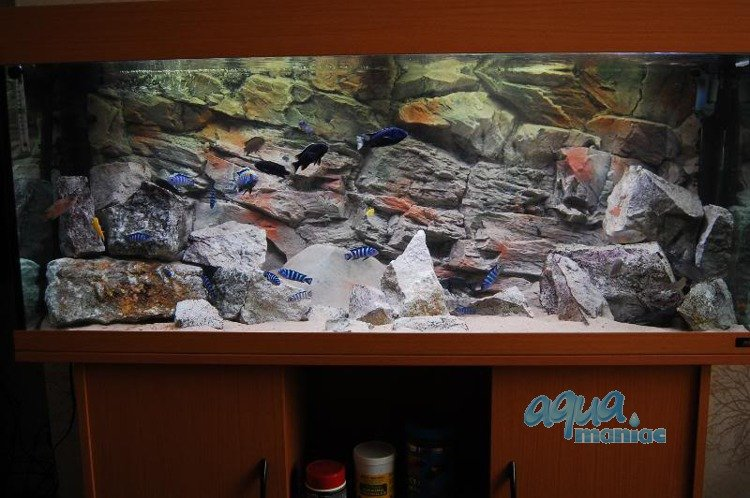 aquarium background for juwel aquarium rio 300 3d rock. Black Bedroom Furniture Sets. Home Design Ideas