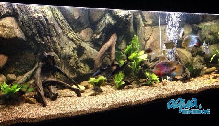 aquarium background for juwel rio 400 aquarium 3d amazon. Black Bedroom Furniture Sets. Home Design Ideas