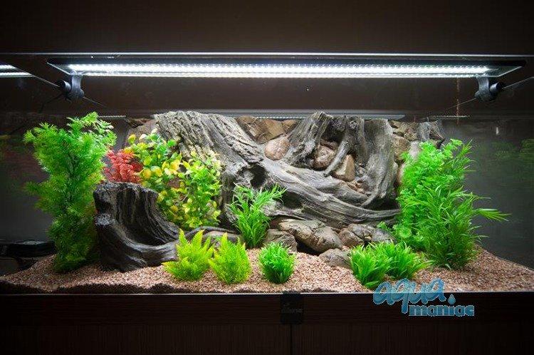 Aquarium stone for small fish tanks for Small fish tanks