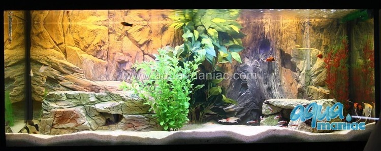 JUWEL RIO 125 basic background 78x42cm