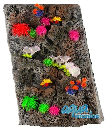 Module Limestone Background 50x60cm with corals