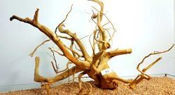 Red Moore Root size 57x40cm - large