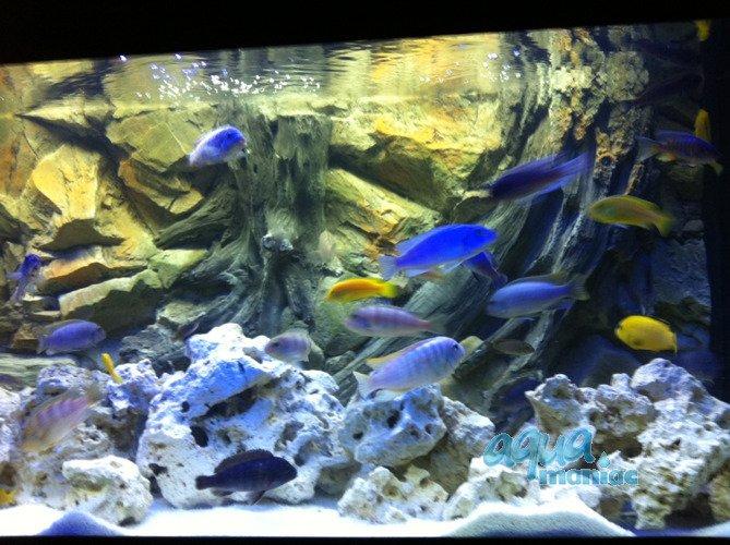 Sehr Aquarium Background for Juwel Rio 240 Aquarium - 3d root background MT91