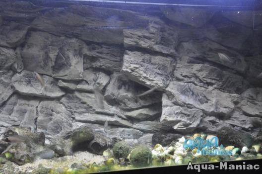 3D grey rock background 146x54cm