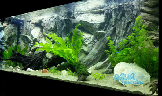 3D root background 117x54cm