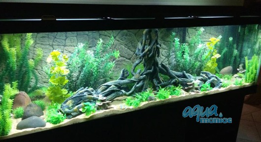 JUWEL Vision 450 3D Root Background 147x53cm in 3 sections