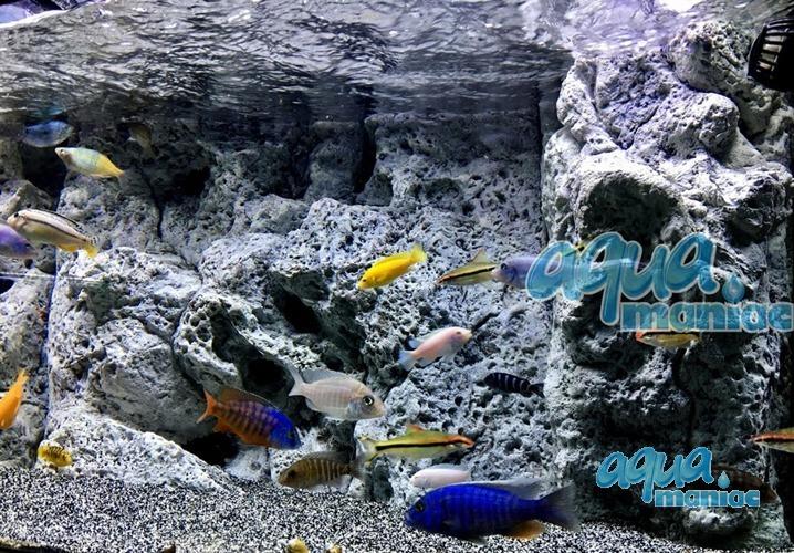 Modules of Limestone Background to fit 100X40cm aquarium