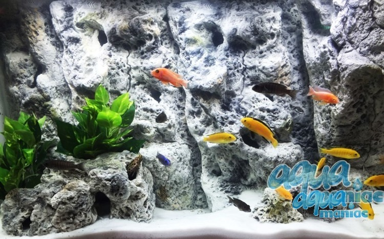 Limestone Background to fit 120X60cm aquarium