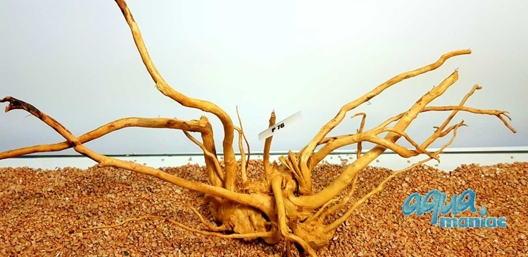 Red Moore Root size  22x53cm