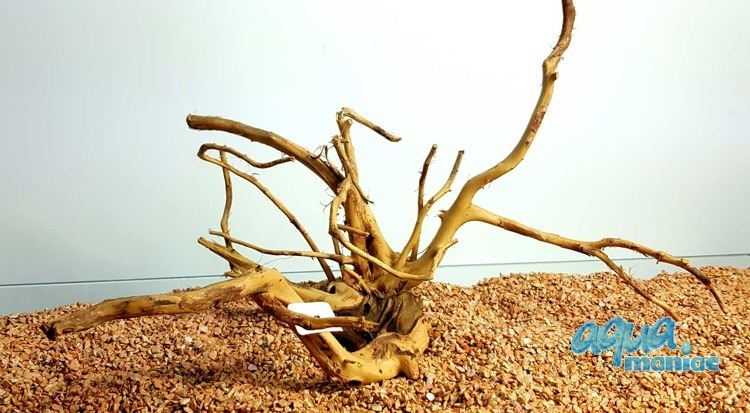 Red Moore Root size 23x38cm