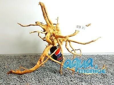 Red Moore Root size 45x40cm