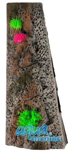 Start Module Limestone Background 20x30cm with corals