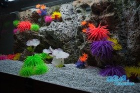Modules of Limestone Background with corals to fit 150x50cm aquarium